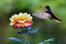 Birds  / by Sandra Solimine-Campagna