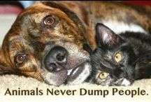 More love of Fur Babies! / Dogs, cats, puppies and kittens! / by Nancy Gale