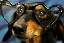 Animals & cutie pie pets / by Diane Jones