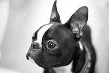one day i will own a french bulldog or a basset hound! / by Alrie Velleman