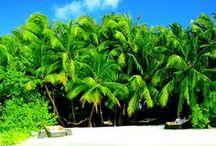 *̡͌l̡* Tropical Paradise ☼ / ~ Beautiful caribbean, sandy beaches all around the world  ~ Hawaii, Bora Bora, Fidschis, Maledives, Indian Ocean <3  / by Nadine Bo