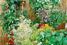 Gardening / Tips and Ideas / by Monica Maxwell