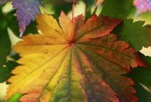 Seasons- Golden Rays of Autumn / by Toni Lange