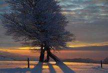 Seasons - Winter Wonderland / by Toni Lange