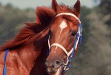 Horses - Legendary  / by Toni Lange