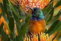 Hummingbirds  / by Toni Lange