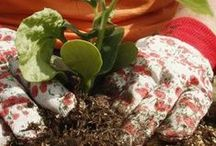 Gardening: Vegetables & Such / by Teresa Russell