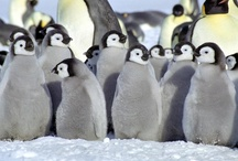 PENGUINS! / by Michael Miller