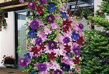 plants and flowers / by Jean Shepherd