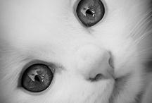 here kitty, kitty / by Linda Zeiske