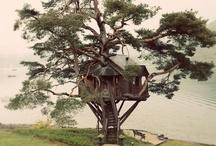 Tree houses  / by Eric Lohman