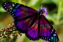 Wings of pretty colors / by Wanda McBride-Owens
