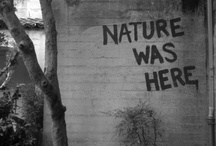nature / by Faith Pahoundis