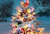 winter wonderland  / by Sarah Geldart