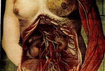 Anatomía médica / by Alberto Martínez