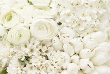 Flower / by Harriet W