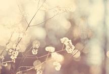 Soft / Away / by Pralinoize