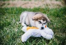 Woof! / by Kathryn Woodruff
