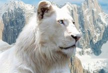 WHITE LIONS  / by Colleen