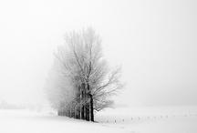 wintertime / by Elizabeth Gay