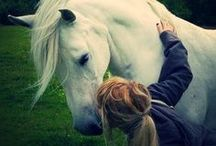 ~ An Equine Romance ~ / by Kerry Muller
