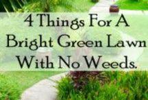 {Garden Love} Lawns / by Jen Baird-Wieringa