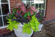 {Garden Love} Planters / by Jen Baird-Wieringa