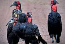 aves domésticas e silvestres / domésticas e silvestre / by Damiria Machado