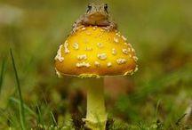 fungos  / by Damiria Machado