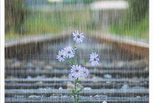 Rain, Rain, Go Away!  Come Again Some Other Day! / by sandra whalen