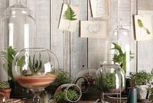 Plants & terrariums / by Flower 597