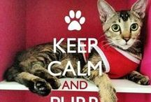 KEEP CALM AND........... / by caty Gonzalez