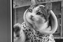 ANIMALS FASHION / by caty Gonzalez