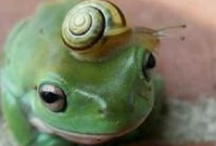 frogs, toads, snails & shells / by kathy burban