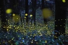 """Fireflies / I have very fond memories of chasing """"lightning bugs"""" when I was a kid.  Magical fun. / by Laura Brown"""