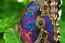 Butterflies / by Laura Brown