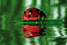 Ladybugs / by Laura Brown