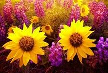 Blooms & Butterflies / by Stacy Talcott Hutchinson