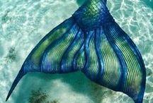 mermaids / by Laura Brown