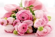 Guus ♥ Flowers / Bloemen waar ik blij van word... / by Guus