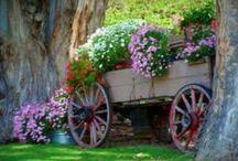 Wheelbarrows, Wagons & Carts. / by Marion Phillips-Eaton