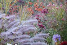 Lush Gardens. / by Glenn Harrison