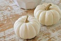 Automne ... white pumpkins / by Danièle