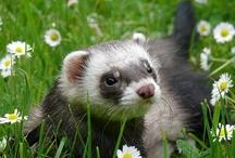 Alex's cute animal pics / by Sandy Rocha