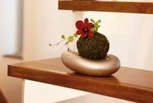 Home Gardens - Indoor & Succulent plants / Home Gardens - Indoor, Vertical,Terrarium / Miniature gardens, Succulent Plants / by Soundof Music