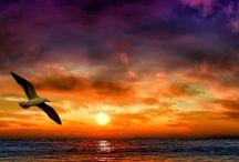 Sea beauty + sunsets + hypnotic moon / by Jaira