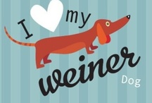 I Heart Animals  / Cute, funny, and other animals!  / by Billie Criswell