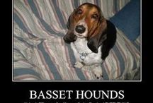 BASSET HOUND / by Francoise PERDRIER