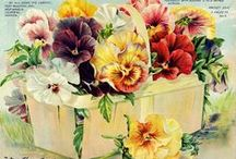 Antique Seed Illustrations / by Sandra Culberson