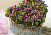 JUST FLOWERS / by Johanne Plante